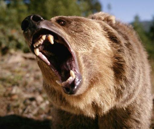 Под Харьковом медведь атаковал женщину – пострадавшая в больнице (видео)