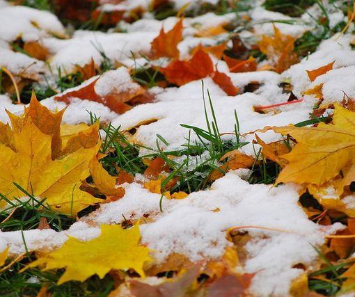 «Каверзный ноябрь». Под Харьковом выпал первый снег: фото-факт