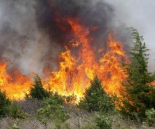 На Харьковщине кардинально уменьшилось количество лесных пожаров