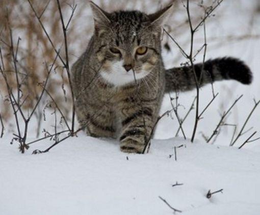 В Харькове запретили отлов кошек