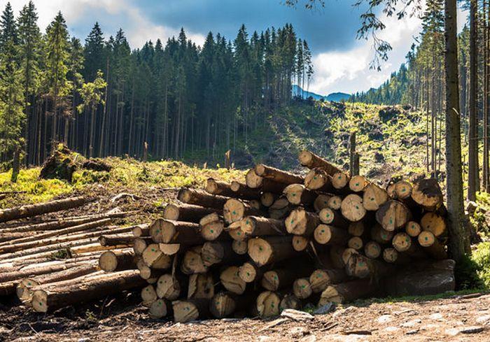 В Украине резко ужесточили наказание за уничтожение лесов