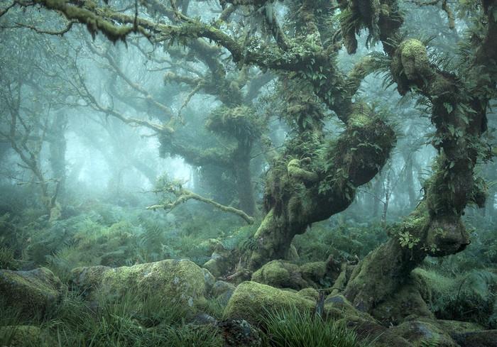 «Как в сказке». В Британии обнаружили лес из «Властелина колец»: фото-факт