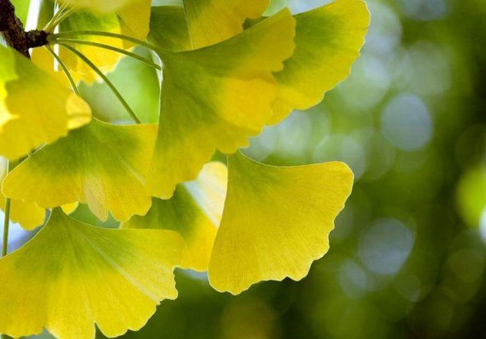 Ученые создали чудо-листья, отлично поглощающие углекислый газ