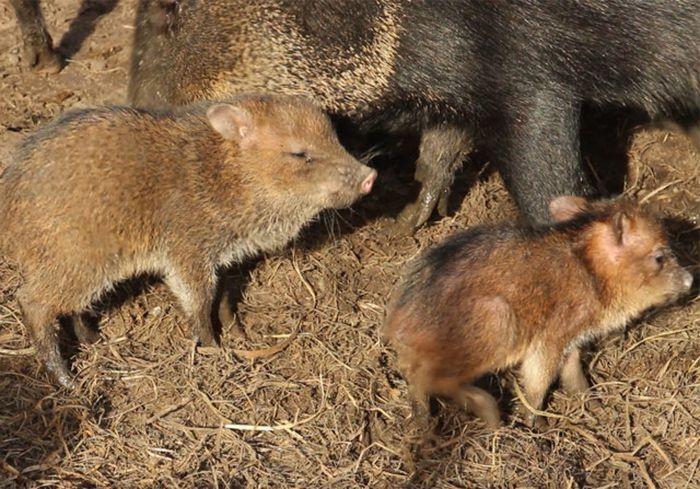 В Харьковском зоопарке родились обаятельнейшие малыши (видео)