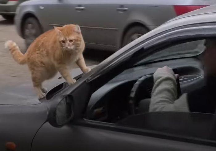 В Харькове появился кот-«таксист»: видео-факт