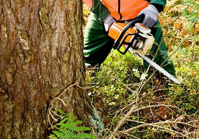 Харьковчане потребовали прекратить вырубку деревьев и озеленить город
