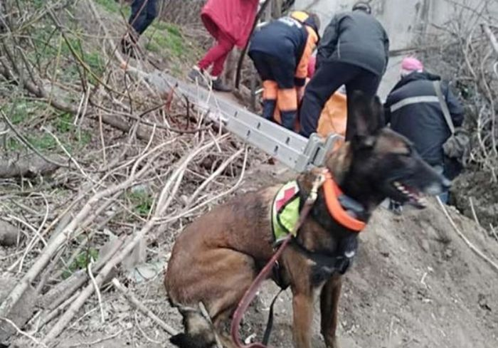 В Днепре собака спасла женщину от мучительной смерти (видео)