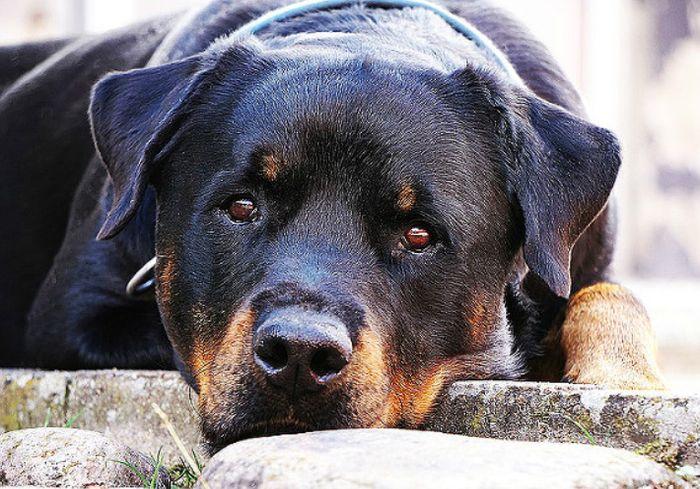В США собака спасла от гибели трех человек