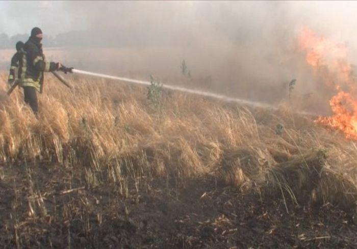 Под Харьковом сгорело целое поле пшеницы