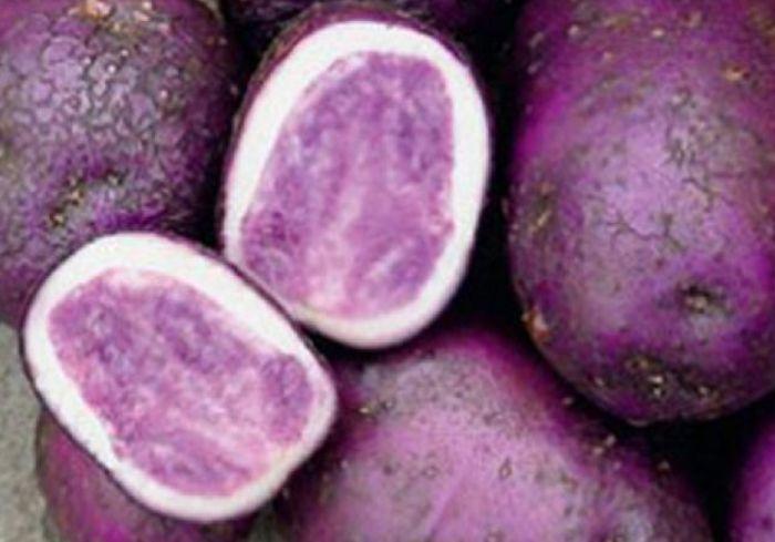 «Мирослава, Княгиня, Фотиния». В Украине стали выращивать разноцветный картофель