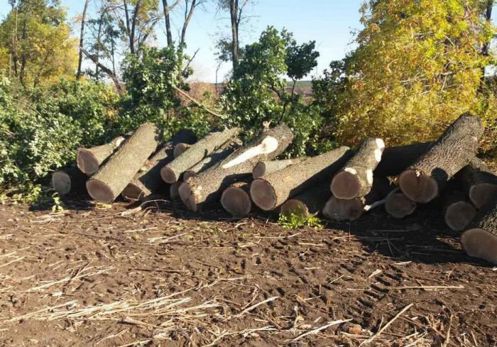 В Харьковской области продолжаются незаконные вырубки