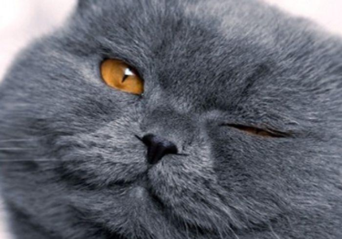 В Китае кот провел ночь с пятью кошками и попал под капельницу