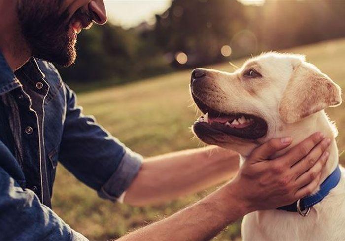 Ученые выяснили, насколько собаки продлевают жизнь своим хозяевам