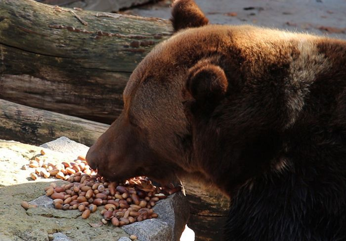 Обитатели Харьковского зоопарка получили зимний «десерт» (видео)