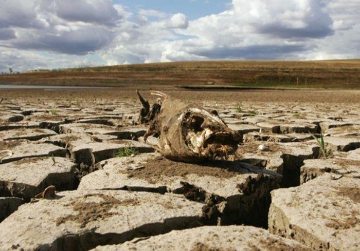Ученые: К середине столетия жара на Земле катастрофически усилится