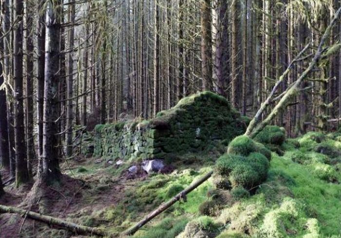 Ученые раскрыли тайну древнего сооружения в лесах Шотландии