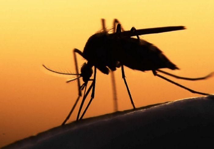 Украинские изобретатели создали эффективную ловушку для комаров (фото)