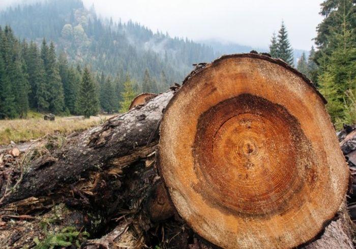 «Это временная бомба». Ученые пересмотрели свои выводы относительно вырубки лесов