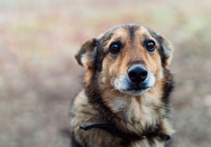 Ученые выяснили, почему нельзя кричать на собак