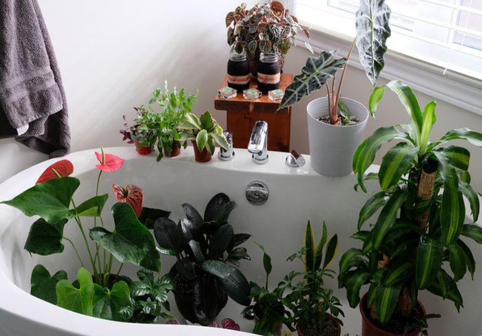 Ученые развенчали миф о пользе комнатных растений для очистки воздуха