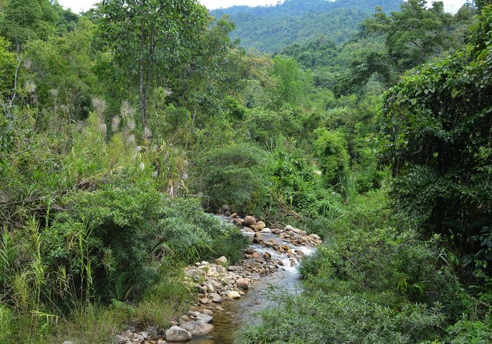 В джунглях Вьетнама обнаружили давно «вымершее» животное (видео)