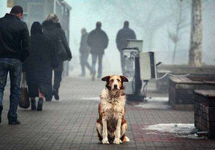 В Украине придумали, как уменьшить количество уличных животных