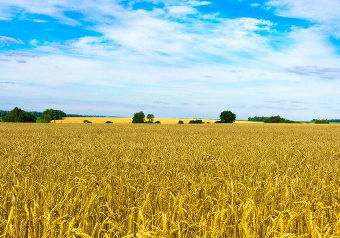 В Кабмине уже подсчитали прибыль от введения рынка земли