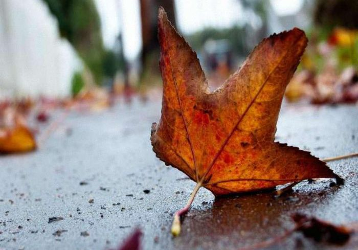 Синоптики сообщили о погоде в Харькове в ближайшие дни