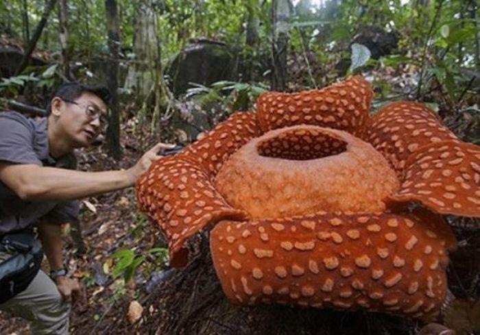 В Индонезии нашли ужасного монстра (фото)