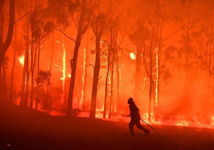 Власти Австралии решили уничтожить тысячи местных верблюдов