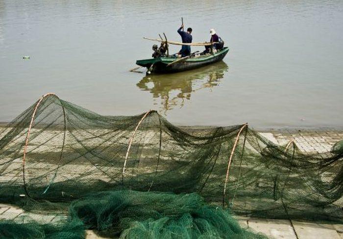 Ученые сообщили о вымирании самых крупных пресноводных рыб в мире (фото)