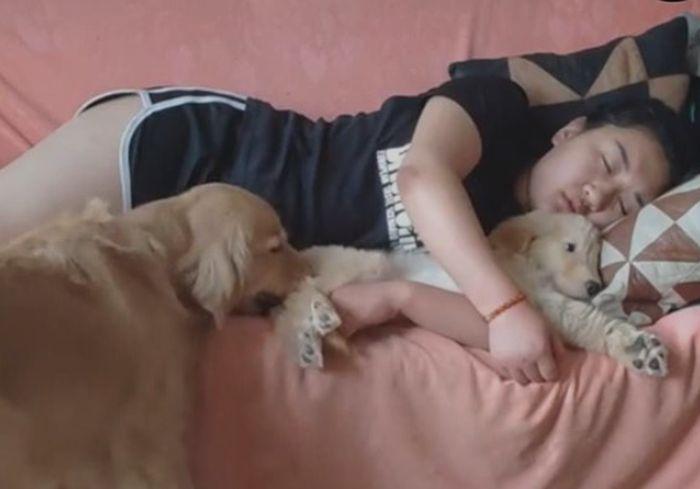 «Не дорос еще!» Сеть позабавила собака, приревновавшая свою хозяйку к щенку (видео)