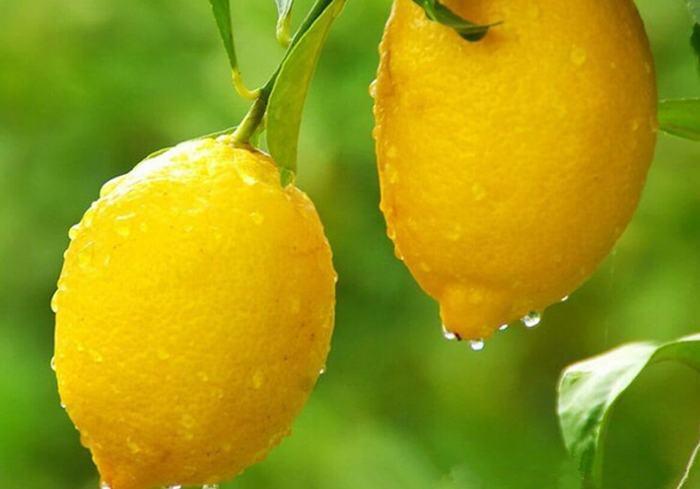 Как правильно поступать с лимоном