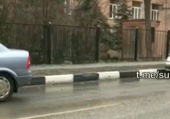 История с овцой в харьковском парке получила продолжение (видео)
