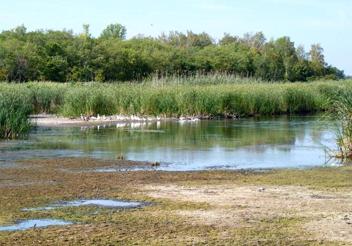 В Харьковской области решили спасти реку