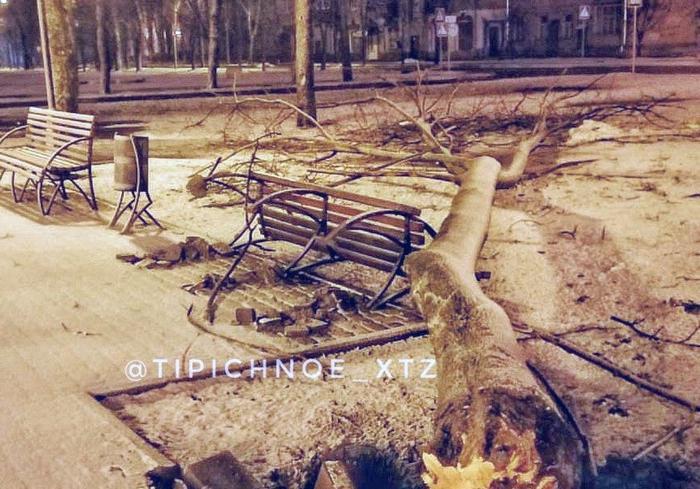 Стихия в Харькове: рухнули более десяти деревьев
