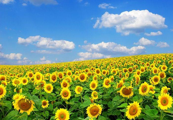 Замминистра экономики: «Без украинского экспорта сельское хозяйство Европы не выдержит»