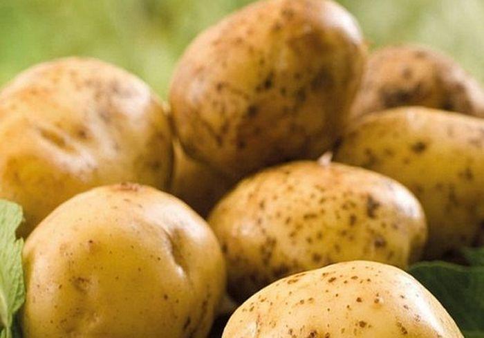 Названа причина резкого снижения цен на новый урожай картофеля