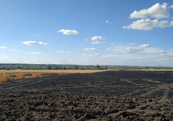 Пожар на пшеничном поле: полиция подозревает детей