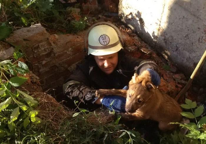В Харьковской области пожарные спасли щенка, который упал в заброшенный коллектор