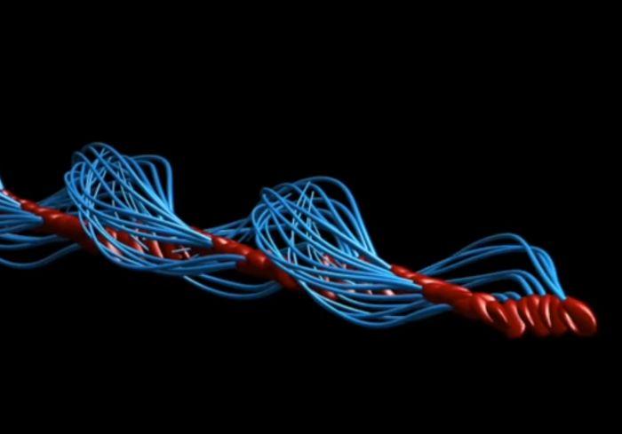 «Не виляют хвостом!»: Ученые опровергли 350-летнее заблуждение о сперматозоидах (видео)