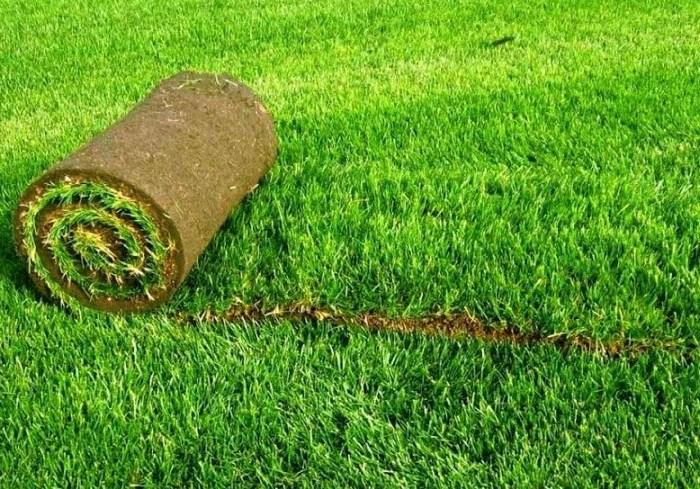 Парк Горького с переплатой заказал рулонный газон на 594 тысячи гривен