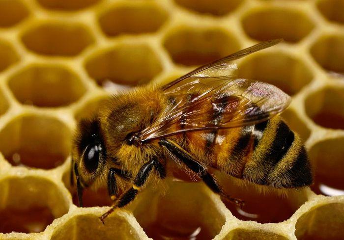 Почему может пениться мед