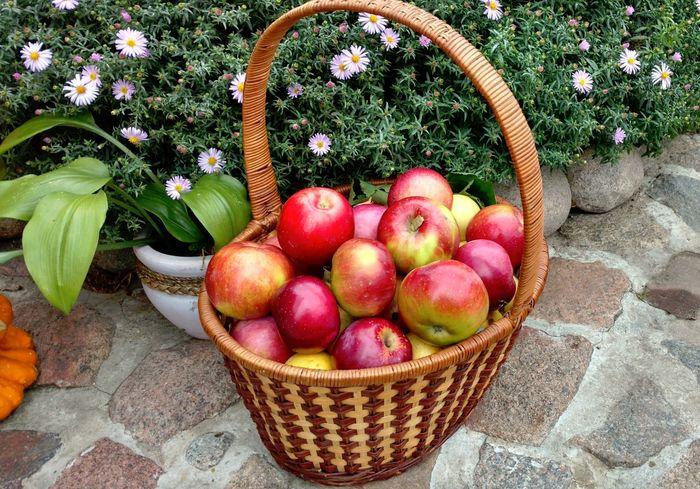 В чем секрет молодильных яблок