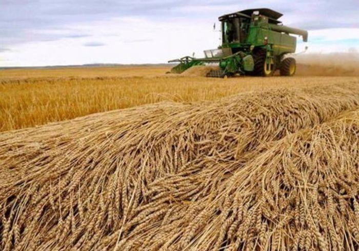 Урожай в Украине оказался лучше, чем прогнозировали