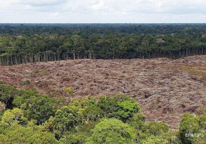 «Ждать уже недолго»: исследователи сказали, когда Земля потеряет свои «легкие»