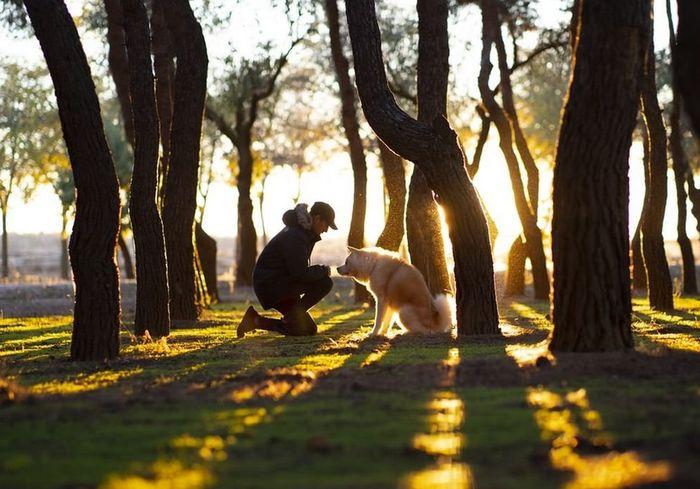 Как выяснилось, собаки защищают людей от старческого слабоумия