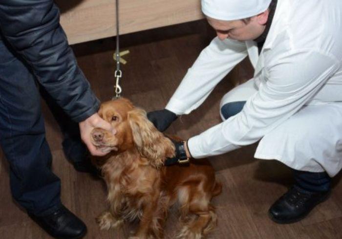 В Харькове скоро стартует вакцинация домашних животных от бешенства