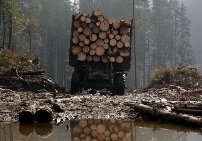 Как выяснилось, вырубка лесов провоцирует болезни
