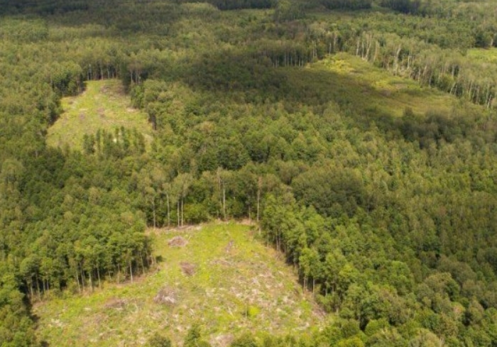Михаил Добкин планирует создать движение для защиты лесов Слобожанщины
